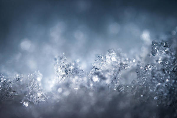 Ice Crystals Photograph - In An Icy World by Chris Dale
