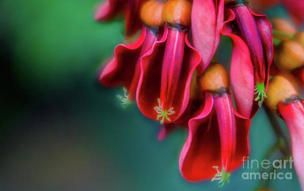 Pod Photograph - In Bloom by DiFigiano Photography