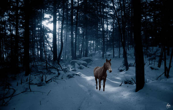 Photograph - In Blue Wood by Wayne King