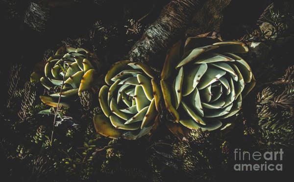 Adapted Photograph - In Dark Bloom by Jorgo Photography - Wall Art Gallery
