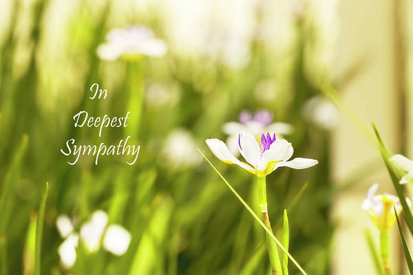 Photograph - In Deepest Sympathy by Kay Brewer