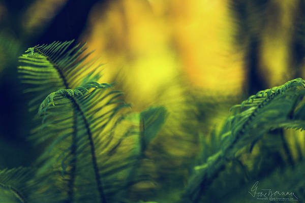 Photograph - In-fern-o by Gene Garnace