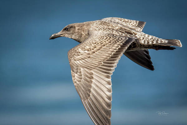 Photograph - In Flight by Bill Posner