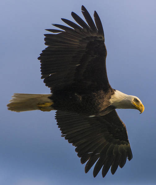 Photograph - In Flight by Gary Lengyel