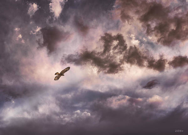 Photograph - In Flight by Leland D Howard