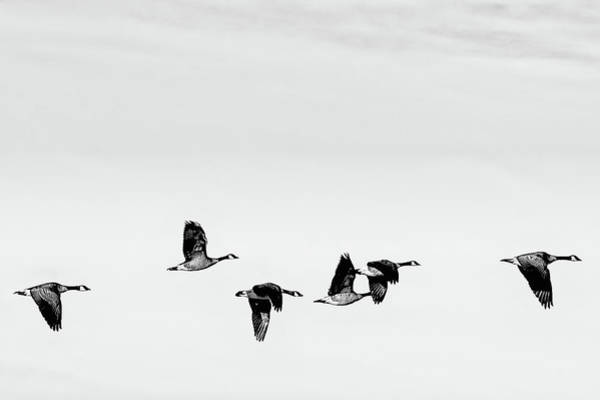 Photograph - In Flight by Philip Rodgers
