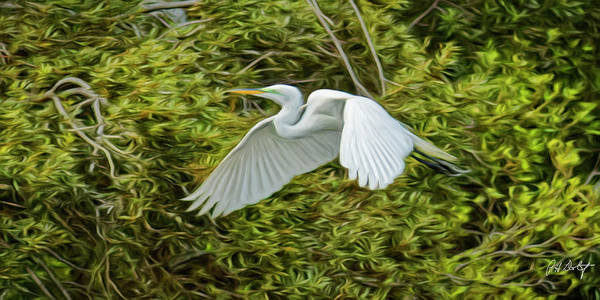 Lowcountry Digital Art - In Flight by Phill Doherty