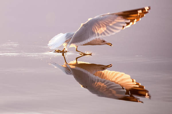Photograph - In-flight Reflection by Scott Bean