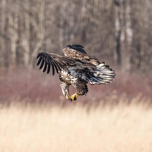 Bif Photograph - In Flight Snack by Paul Freidlund