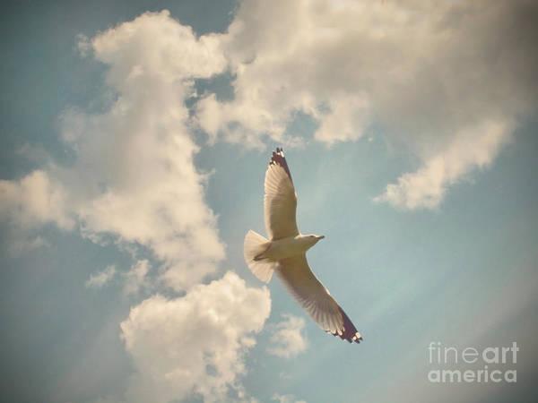Photograph - In Flight by Tara Turner