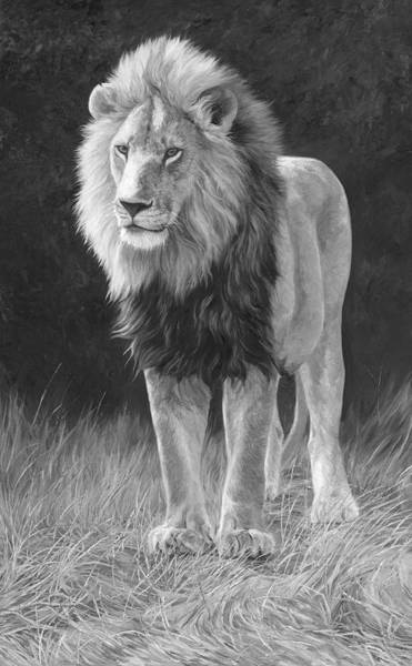 Lions Painting - In His Prime - Black And White by Lucie Bilodeau