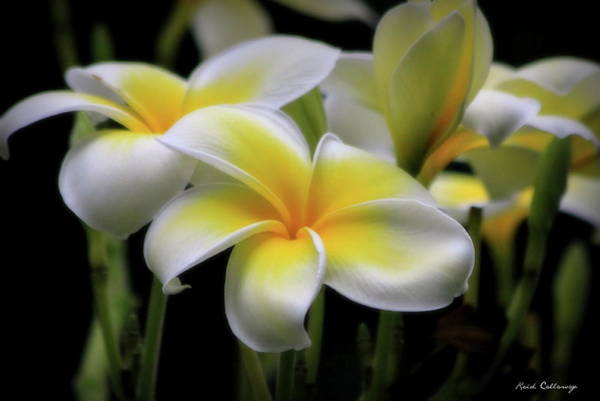 Photograph - In Love With Butterflies Plumeria Flower Cecil B Day Butterfly Center Art by Reid Callaway