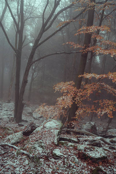Photograph - In Misty Winter Woods by Jenny Rainbow