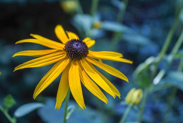 Photograph - In My Garden by Arlene Carmel