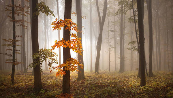 Misty Photograph - In November Light by Franz Schumacher