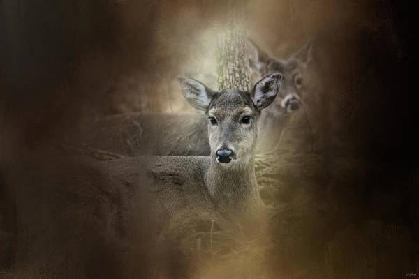 Photograph - In Our Woods by Jai Johnson