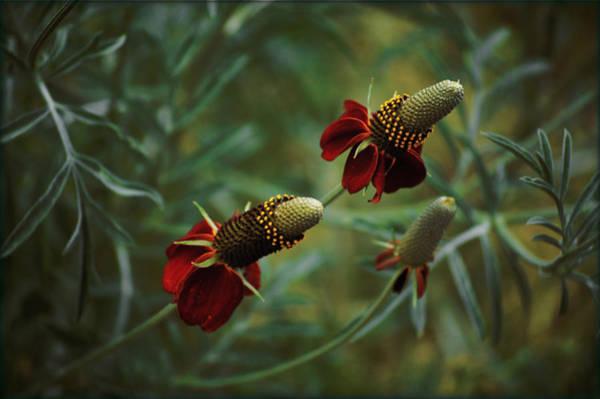 Photograph - In Rousseaus Garden by Douglas MooreZart