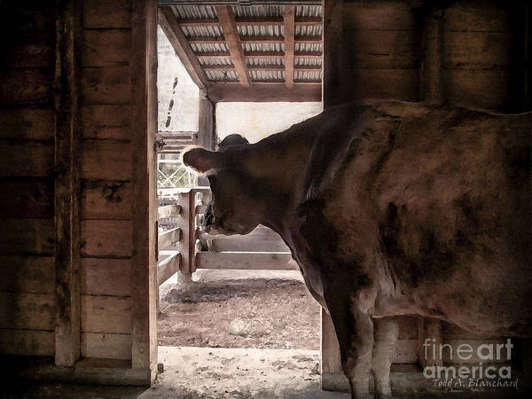 Photograph - In The Barn by Todd Blanchard