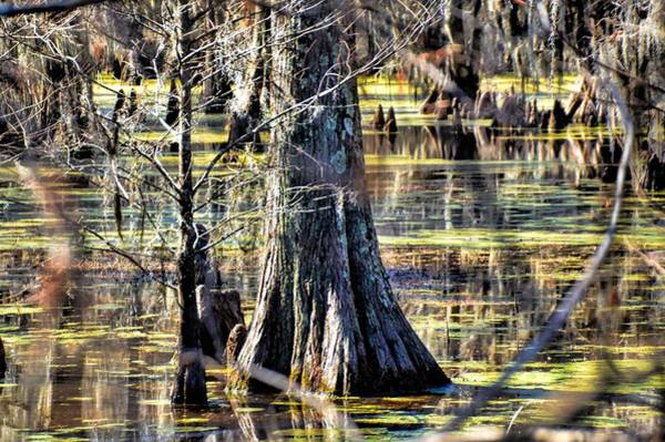Photograph - In The Bayou by Diana Mary Sharpton