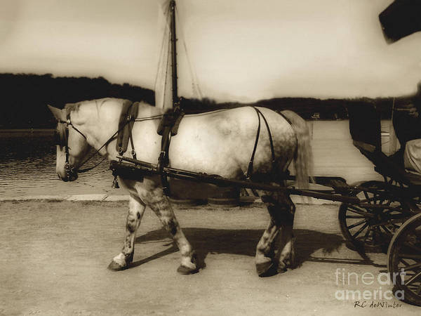 Photograph - In The Cool Of The Evening by RC DeWinter