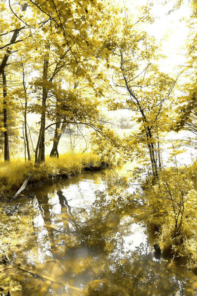 Photograph - In The Creek by Sharon Popek