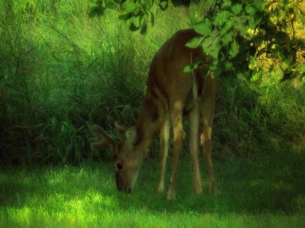 Photograph - In The Dappled Light by Mary Wolf