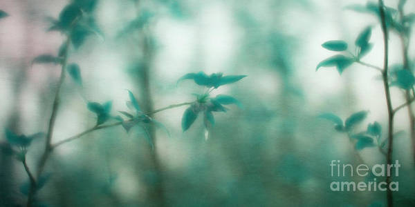 Wall Art - Photograph - In The Deep Forest 4 by Priska Wettstein