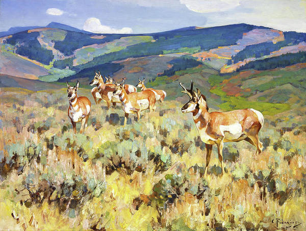 Goat Painting - In The Foothills - Antelope by Rungius Carl