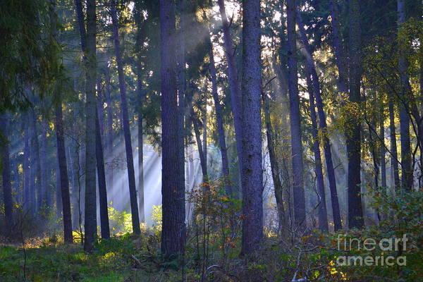 Wall Art - Photograph - In The Forest I by Angelika Heidemann