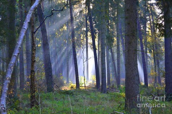 Wall Art - Photograph - In The Forest J by Angelika Heidemann