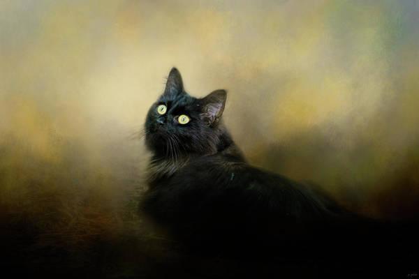 Photograph - In The Garden Light Cat Art by Jai Johnson