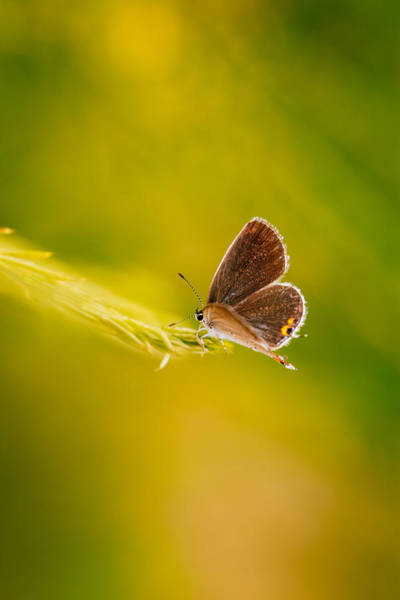 Skipper Photograph - In The Garden Of Gold by Shane Holsclaw