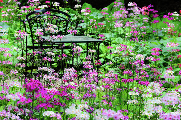 Photograph - In The Garden by Stewart Helberg