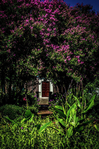 Photograph - In The Garden - The Hermitage by James L Bartlett