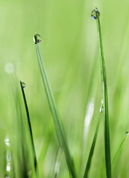 Wall Art - Photograph - In The Grass by Rebecca Cozart