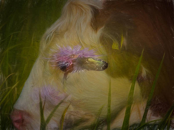 Photograph - In The Head Of A Cow by Leif Sohlman