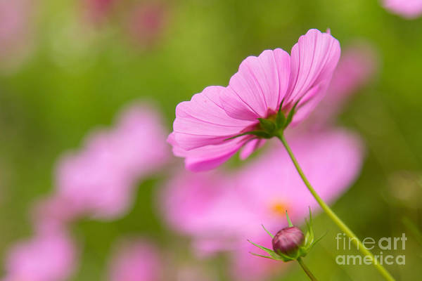 Photograph - In The Light by Karin Pinkham