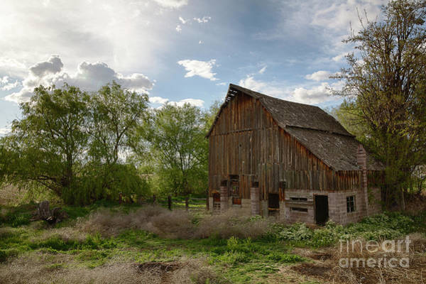 Wall Art - Photograph - In The Midst Of The City by Idaho Scenic Images Linda Lantzy
