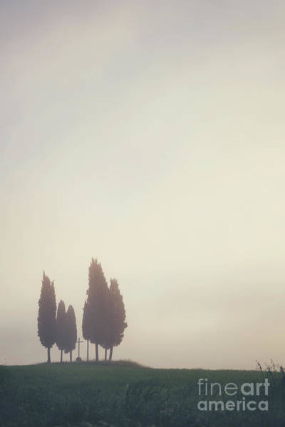 Cypress Photograph - In The Mist by Evelina Kremsdorf