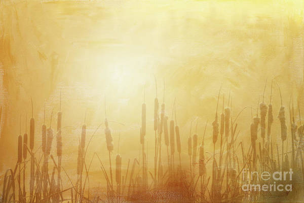 Photograph - In The Mist - II  by Beve Brown-Clark Photography