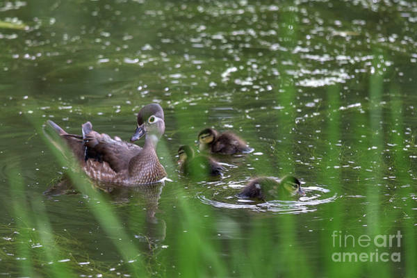 Photograph - In The Pond  by Tatiana Travelways