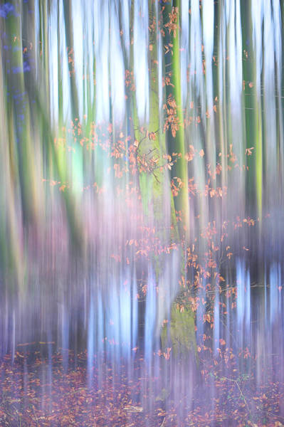 Spring Awakening Photograph - In The Spring Woods. Impressionism by Jenny Rainbow
