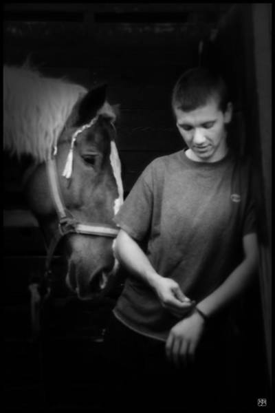 Photograph - In The Stable by John Meader