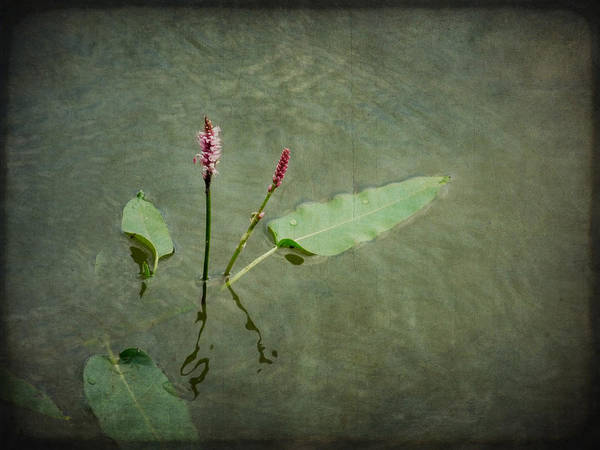 Photograph - In The Stillness... Love Whispers My Name by Lucinda Walter