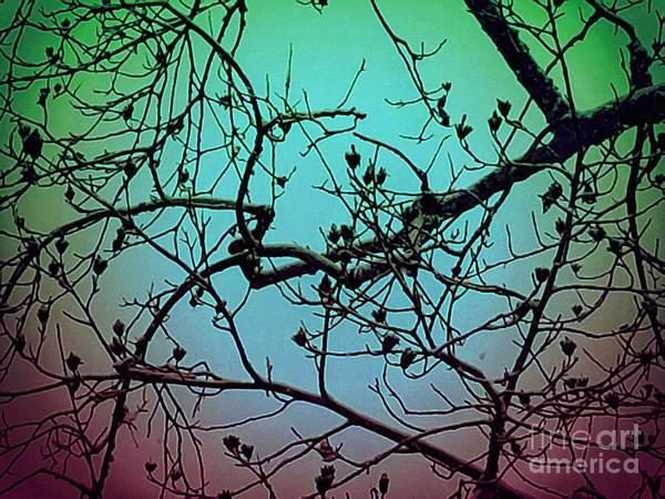 Photograph - In The Stillness by Rachel Hannah
