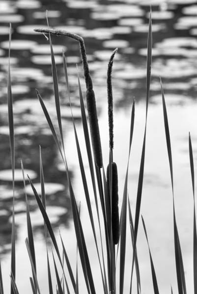 Photograph - In The Weeds by Christi Kraft