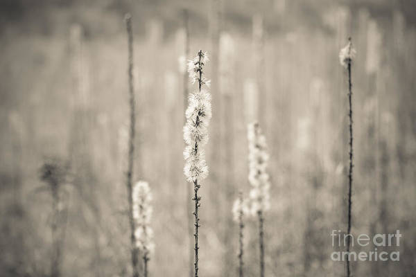 In The Wild Grass Art Print