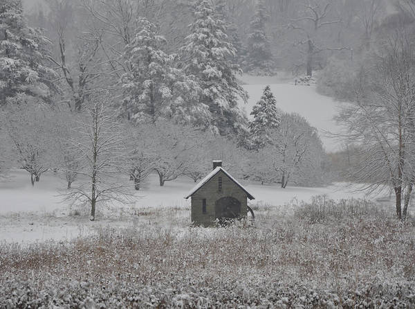 Photograph - In The Winter At Morris Arboretum - Philadelphia by Bill Cannon