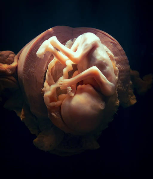 Wall Art - Photograph - In The Womb by Daniel Hagerman