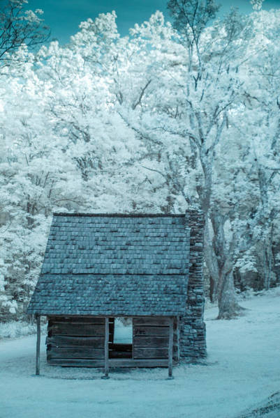 Photograph - In The Woods - Ir by Joye Ardyn Durham